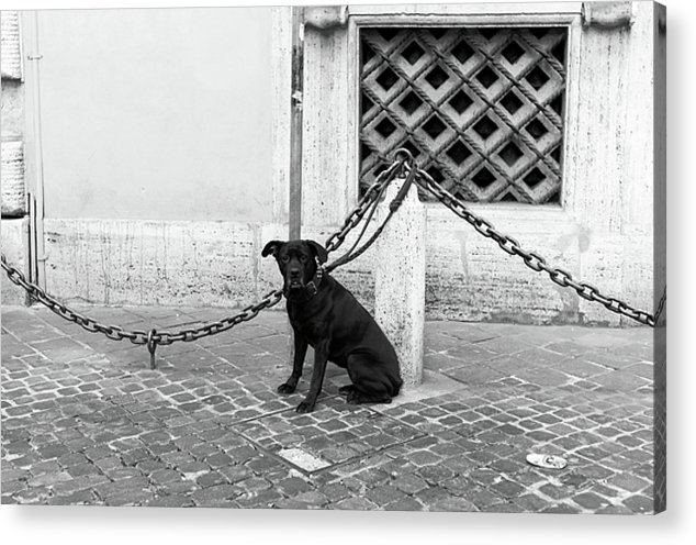 Pictures Acrylic Print featuring the photograph Waiting by John Rizzuto