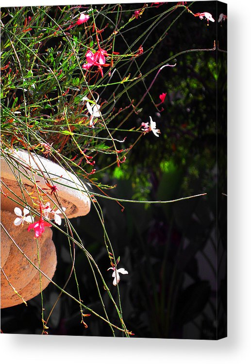 Filigree Acrylic Print featuring the photograph Filigree-iii by Susanne Van Hulst