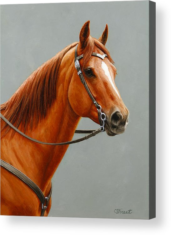 Horse Acrylic Print featuring the painting Chestnut Dun Horse Painting by Crista Forest