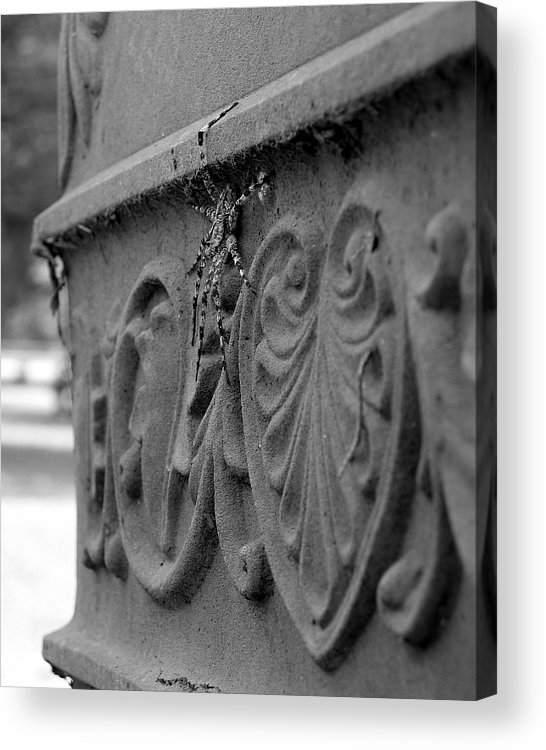Photograph Acrylic Print featuring the photograph Grave Crawler by Lindsey Orlando