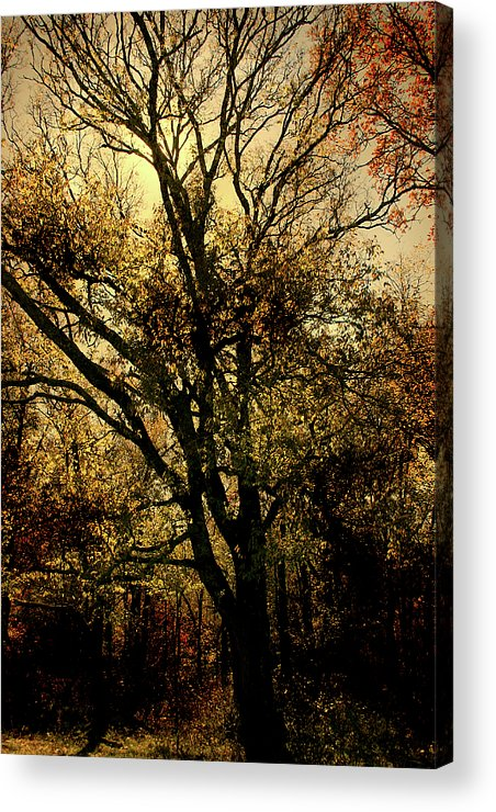Woods Acrylic Print featuring the photograph Deep Woods by Nina Fosdick