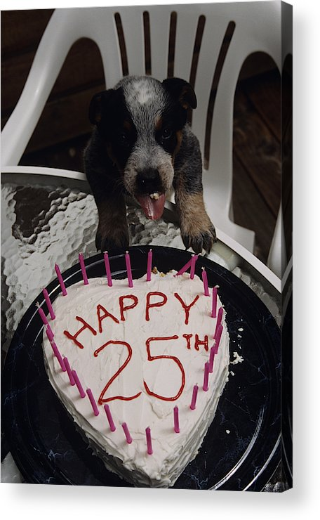 Birthday Cake Acrylic Print Featuring The Photograph Puppy With Heart Shaped 25th
