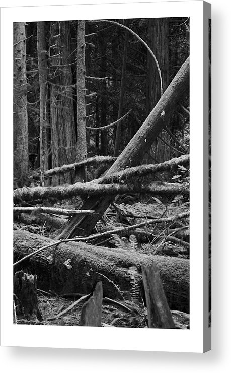 Black Acrylic Print featuring the photograph Natural Forest by J D Banks