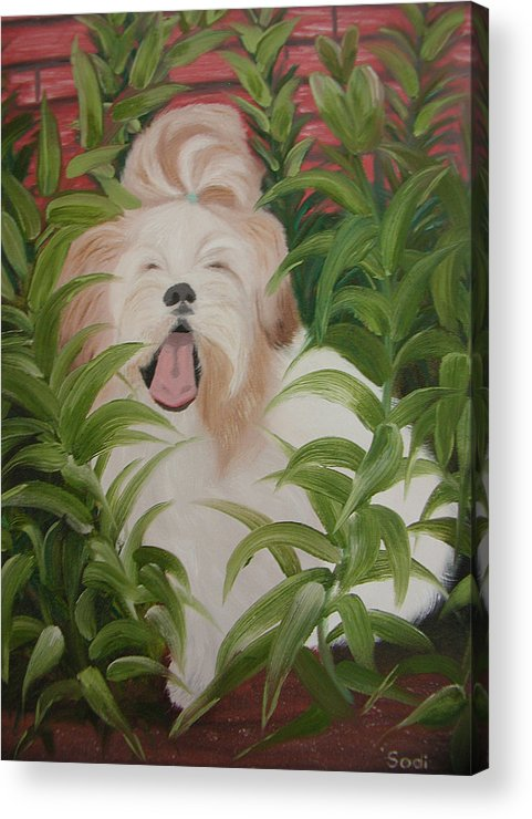 Dog Acrylic Print featuring the painting Pflower Nap by Sodi Griffin