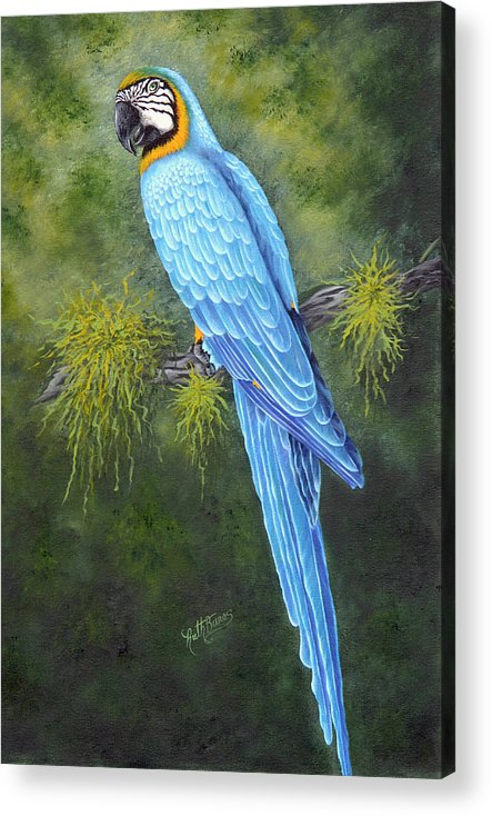 Bird Acrylic Print featuring the painting Buddy by Ruth Bares