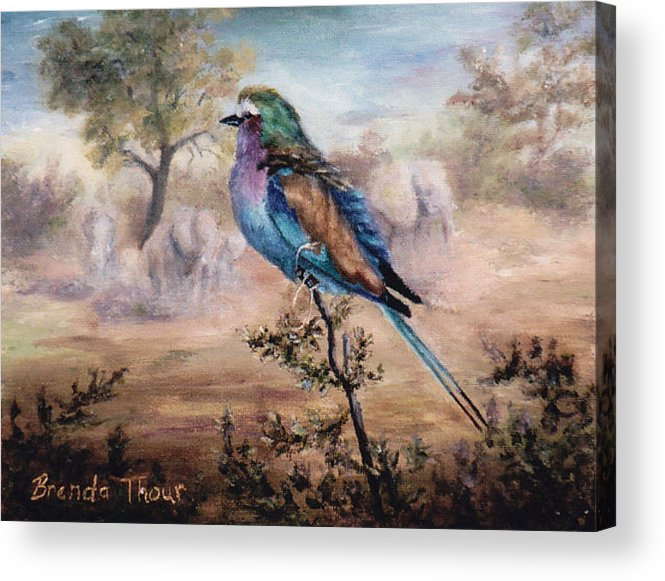 Bird Acrylic Print featuring the painting African Roller by Brenda Thour