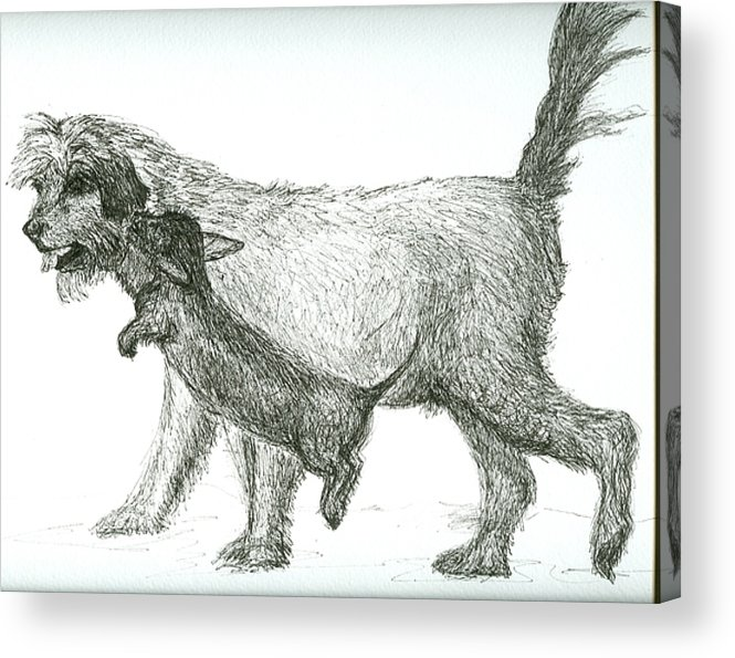 Dogs Acrylic Print featuring the drawing Best Friends by Laura Johnson