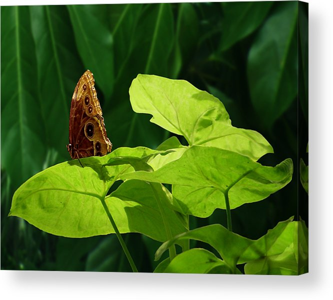 Light Acrylic Print featuring the photograph Morning Light by Gae Helton