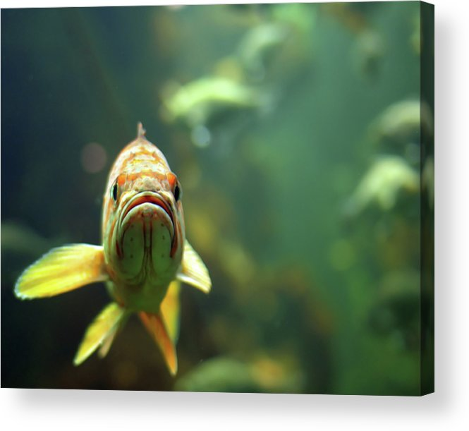 Horizontal Acrylic Print featuring the photograph Why The Sad Face by by Jun Aviles