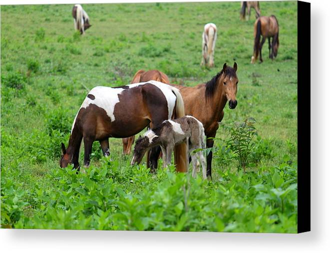 Horse Canvas Print featuring the photograph Family Time by Carol Turner