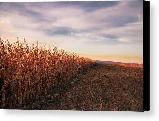 Horizontal Canvas Print featuring the photograph Cornfield by Michael Kohaupt