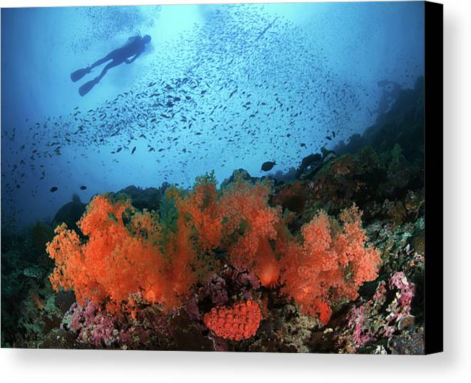 Horizontal Canvas Print featuring the photograph Diver And Soft Corals In Pescador Island by Nature, underwater and art photos. www.Narchuk.com