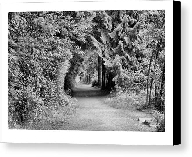 Tunnel Canvas Print featuring the photograph Forest Tunnel by J D Banks