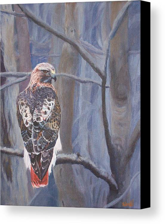 Red-tailed Hawk Paintings Canvas Print featuring the painting Can't See The Forest For The Trees by Bill Werle