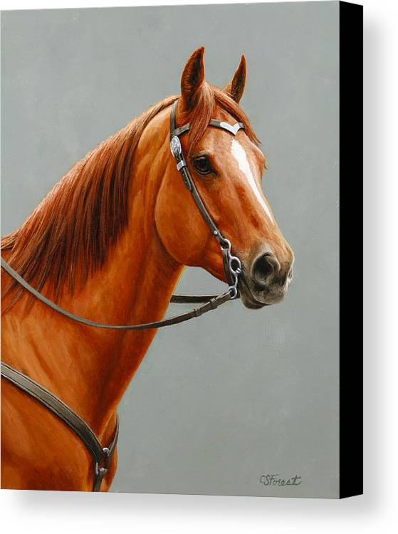 Horse Canvas Print featuring the painting Chestnut Dun Horse Painting by Crista Forest
