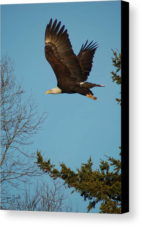 Eagle Canvas Print featuring the photograph Tree Hopping by J D Banks