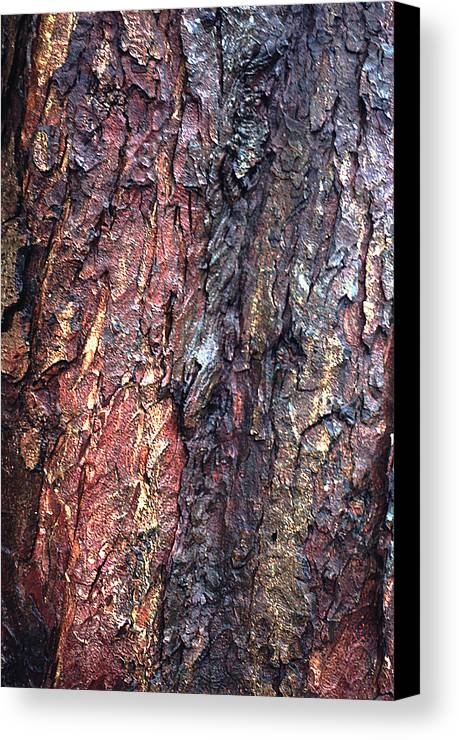 Vertical Canvas Print featuring the photograph Tree Bark by John Foxx