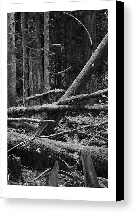 Black Canvas Print featuring the photograph Natural Forest by J D Banks