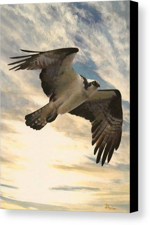 Ospree Canvas Print featuring the painting High Spy by Brent Ander