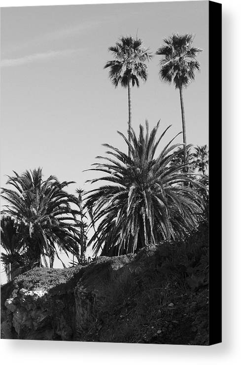 Palms Canvas Print featuring the photograph Palms2 by Shari Chavira