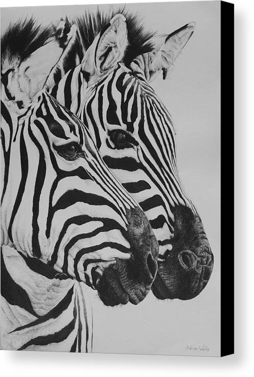 Wildlife Canvas Print featuring the drawing Zebras by Adrian Wells