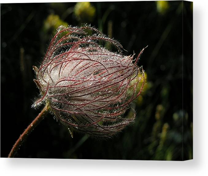 Flower Canvas Print featuring the photograph Fleur Coeur by Jean-Michel Ammon