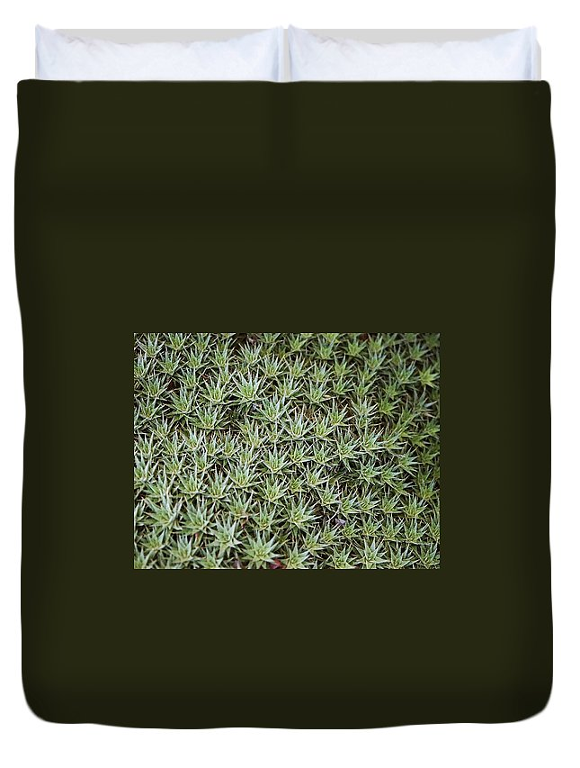 Cactus Duvet Cover featuring the photograph Feild Of Stars by Dean Triolo