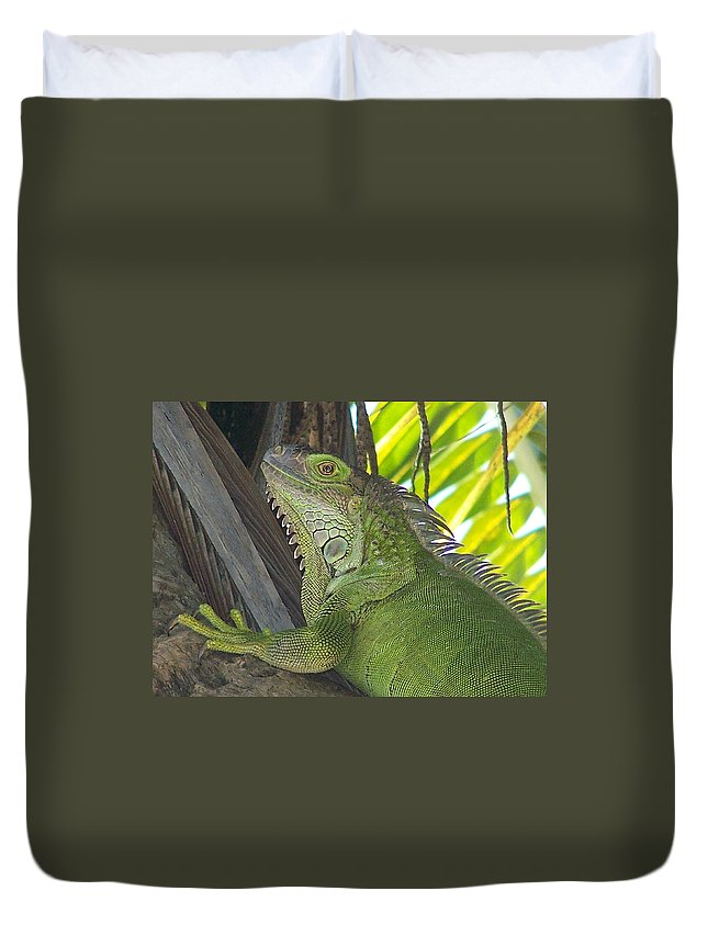 Iguano Duvet Cover featuring the photograph Iguana Puerto Rico by Marilyn Holkham