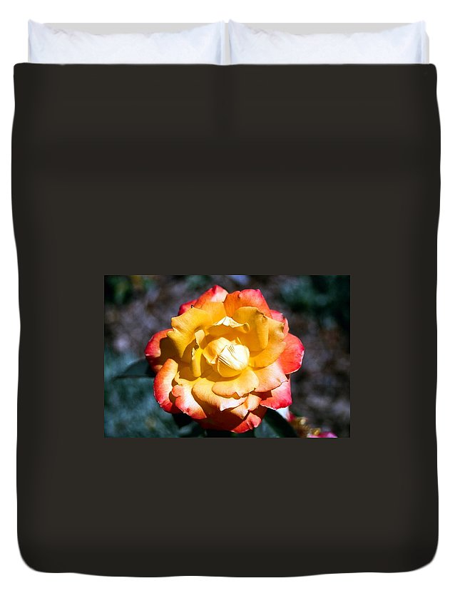 Rose Duvet Cover featuring the photograph Red Tipped Yellow Rose by Dean Triolo