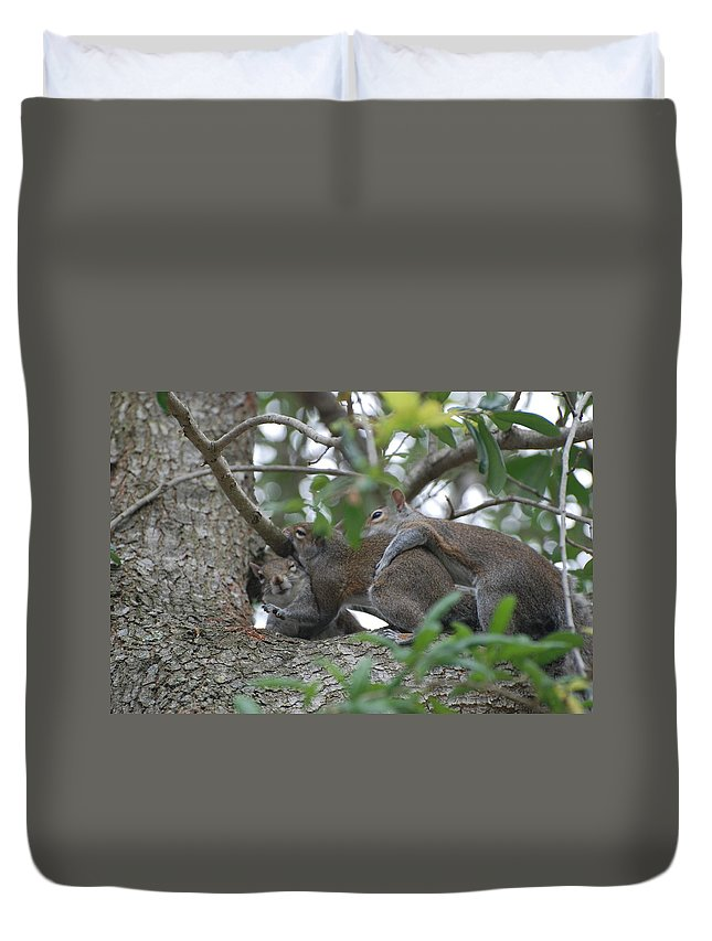 Squirrels Duvet Cover featuring the photograph The Fight For Life by Rob Hans