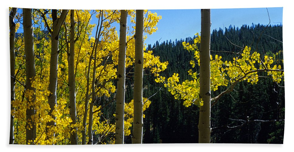 Colorado Bath Sheet featuring the photograph Aspen Vista by Jerry McElroy