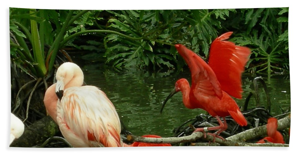 Birds Hand Towel featuring the photograph Flamingo And Scarlet Ibis by Carol Turner