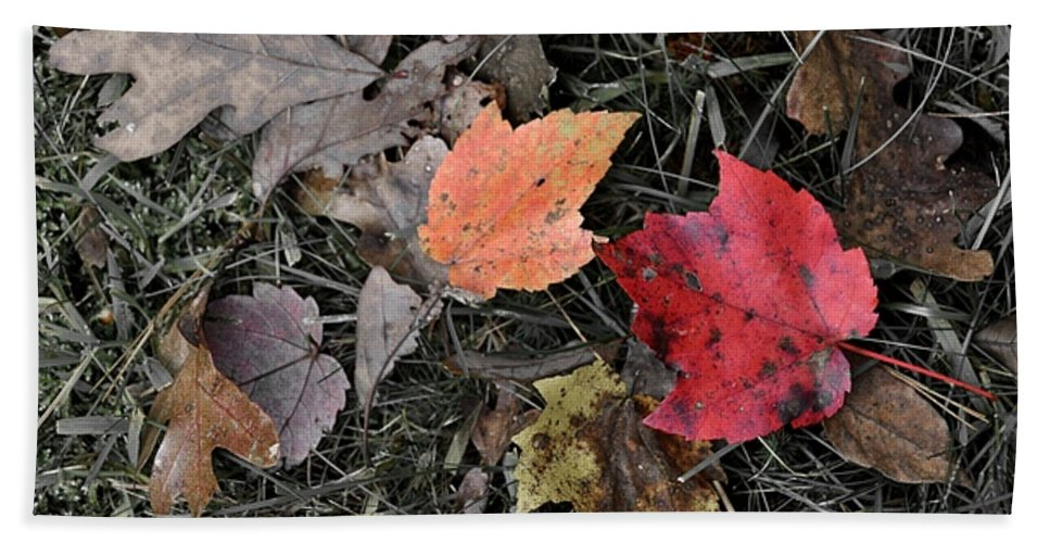 Autumn Bath Sheet featuring the photograph Leaves Are Falling by JAMART Photography