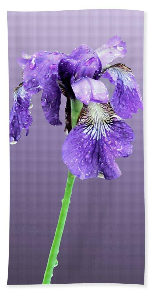 Russian Iris Bath Sheet featuring the photograph Wet Russian Iris by Kristin Elmquist