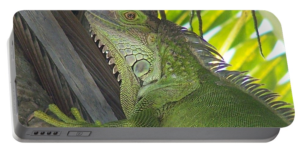 Iguano Portable Battery Charger featuring the photograph Iguana Puerto Rico by Marilyn Holkham