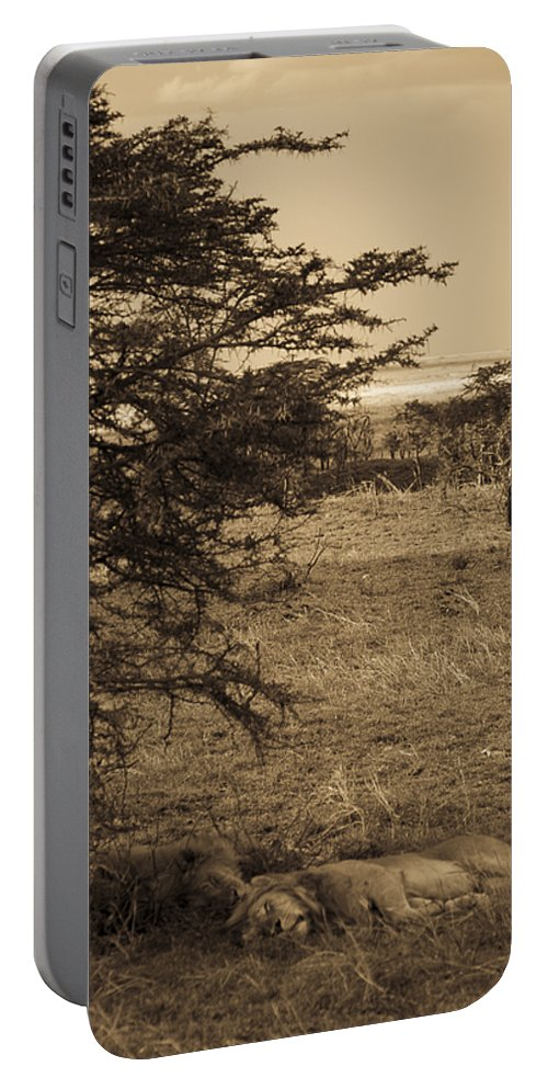 Africa Portable Battery Charger featuring the photograph Male Lions Snoozing In Shade by Darcy Michaelchuk