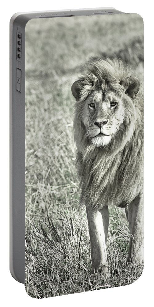 Africa Portable Battery Charger featuring the photograph The King Stands Tall by Darcy Michaelchuk