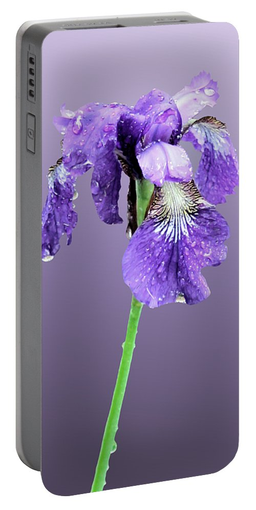 Russian Iris Portable Battery Charger featuring the photograph Wet Russian Iris by Kristin Elmquist
