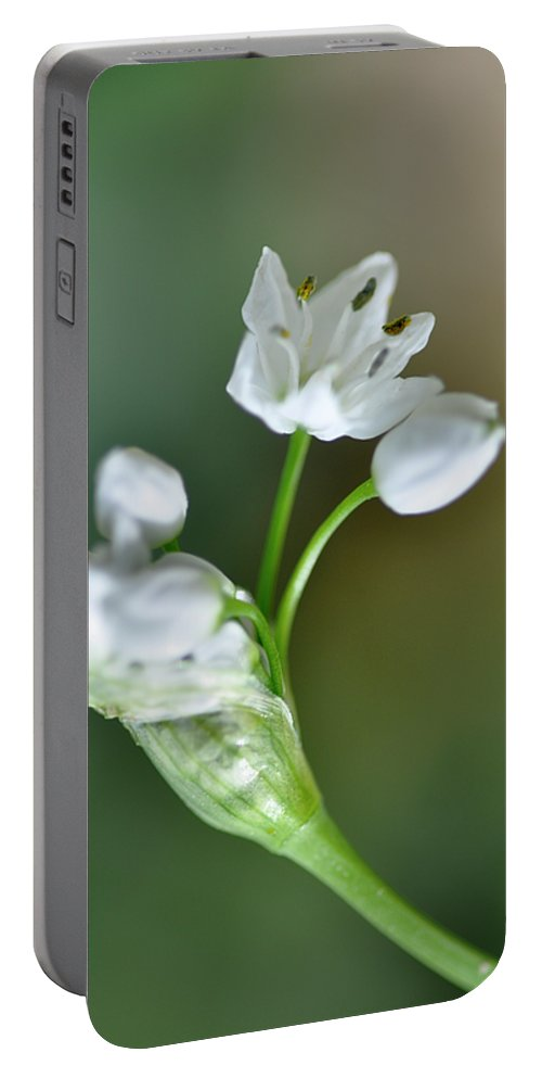 Lachish Portable Battery Charger featuring the photograph White Blossom 3 by Dubi Roman