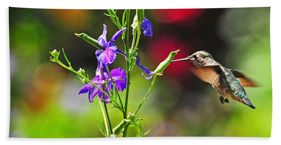 Hummers Beach Towel featuring the photograph Springtime Hummer by Lynn Bauer