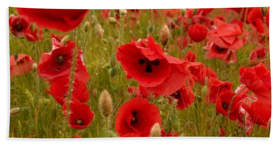 Lehtokukka Beach Towel featuring the photograph Red Poppies 4 by Jouko Lehto