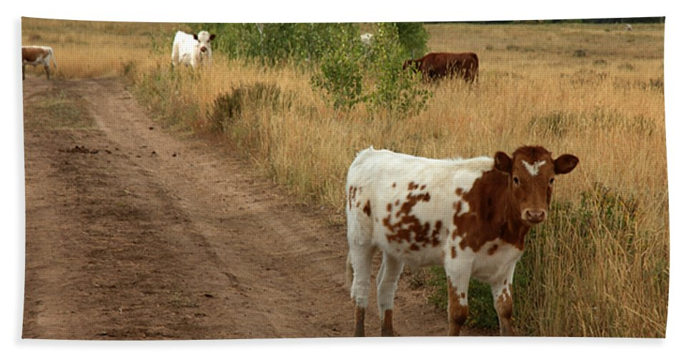 Cattle Beach Towel featuring the photograph Colorado Calf by Jerry McElroy
