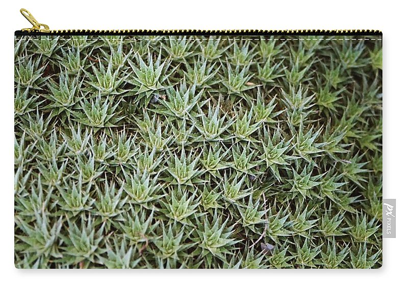 Cactus Carry-all Pouch featuring the photograph Feild Of Stars by Dean Triolo