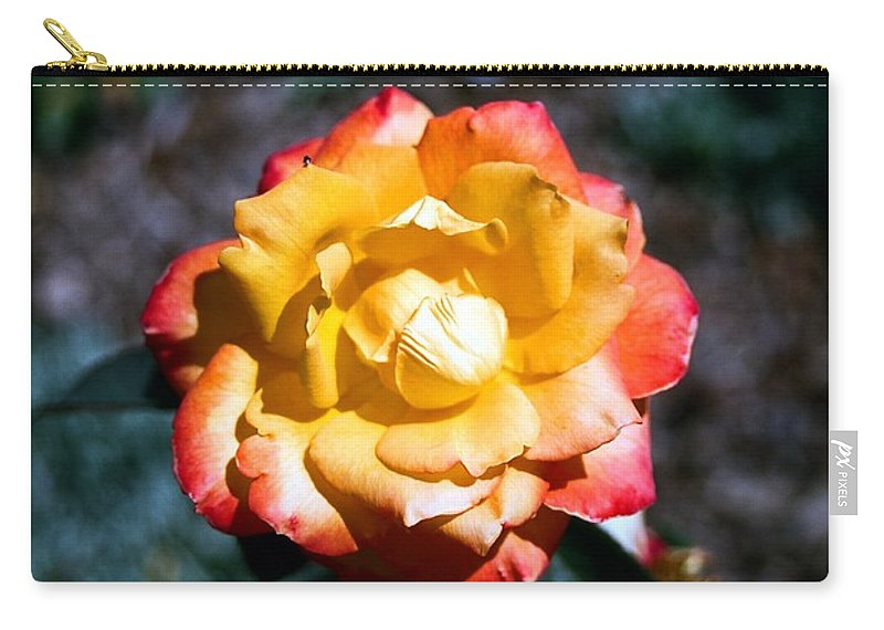 Rose Carry-all Pouch featuring the photograph Red Tipped Yellow Rose by Dean Triolo