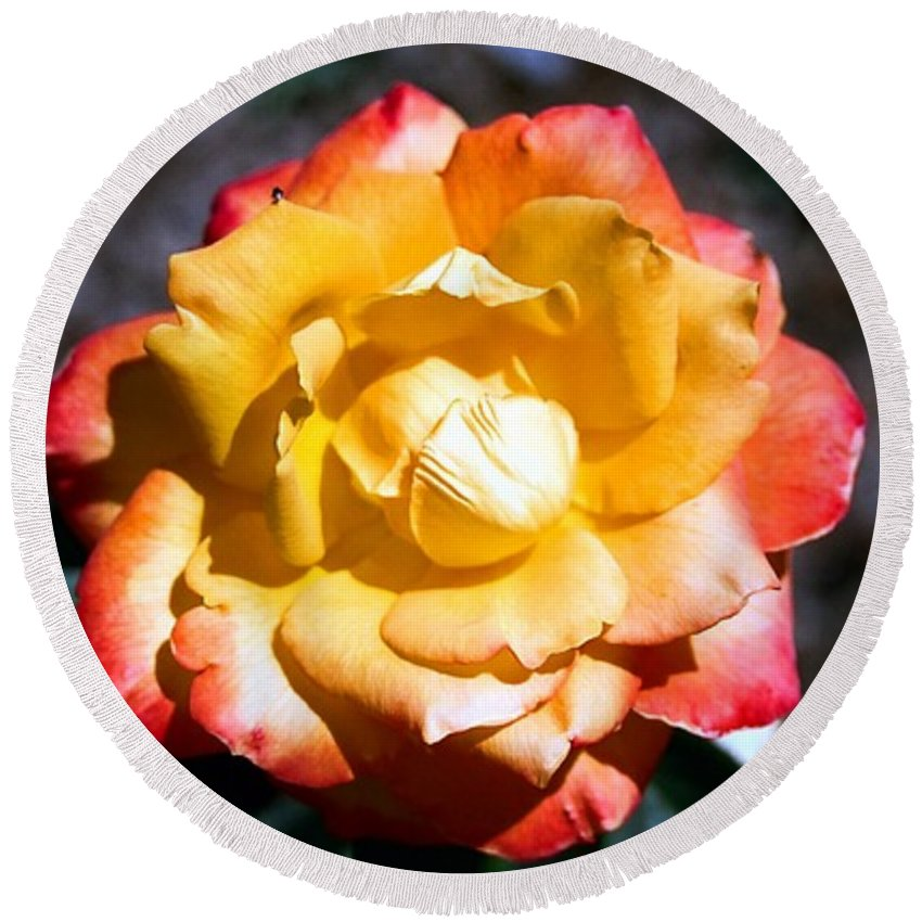 Rose Round Beach Towel featuring the photograph Red Tipped Yellow Rose by Dean Triolo
