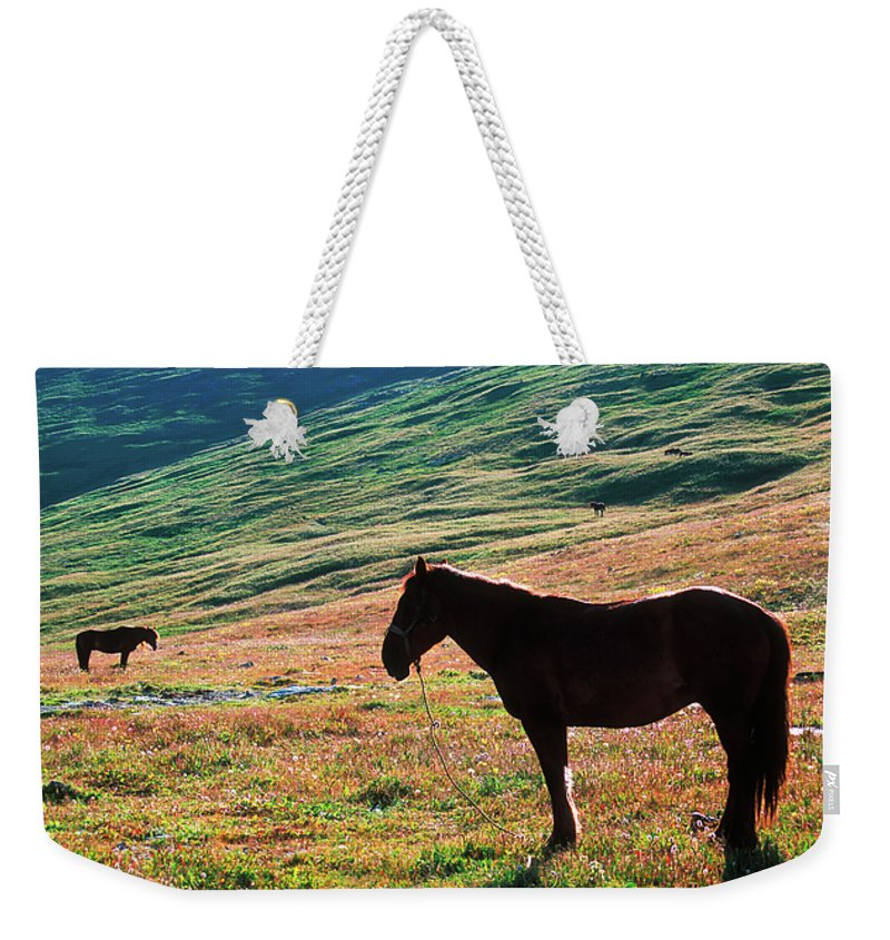 Alone Weekender Tote Bag featuring the photograph Altay by Konstantin Dikovsky