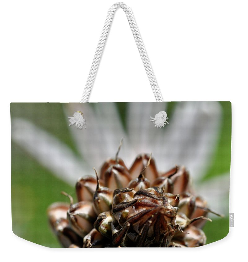Nature Weekender Tote Bag featuring the photograph at Lachish 1 by Dubi Roman