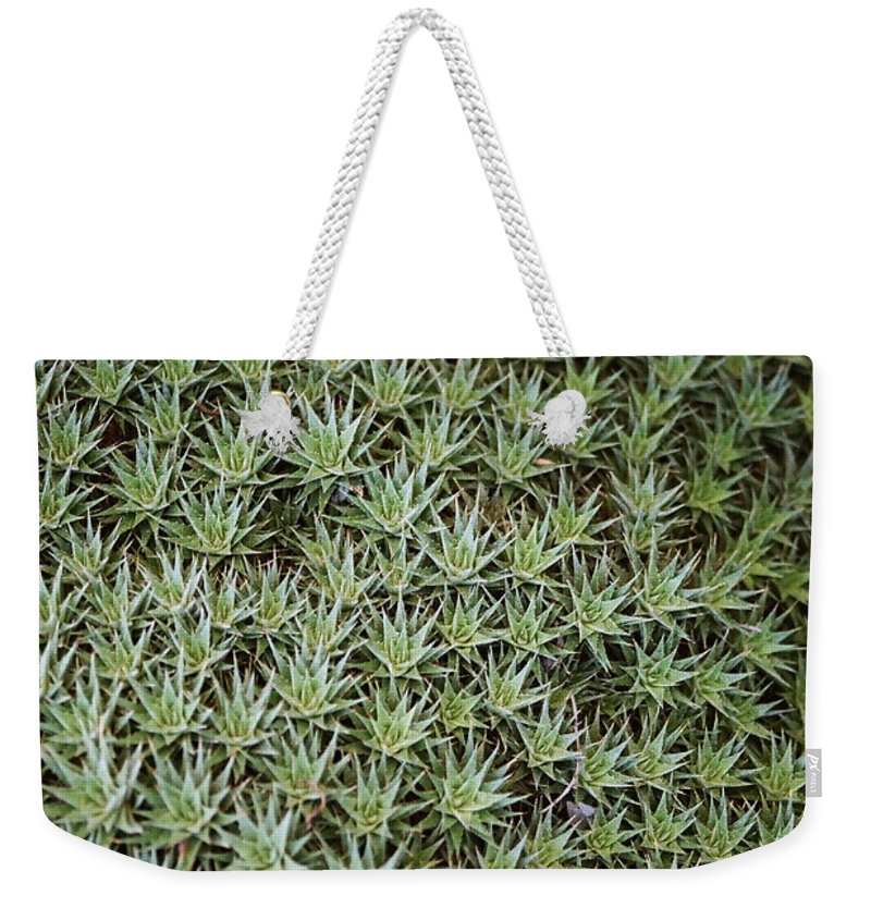 Cactus Weekender Tote Bag featuring the photograph Feild Of Stars by Dean Triolo