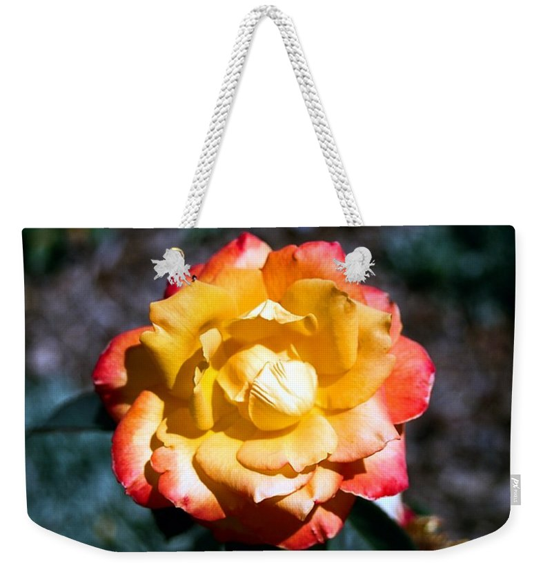 Rose Weekender Tote Bag featuring the photograph Red Tipped Yellow Rose by Dean Triolo