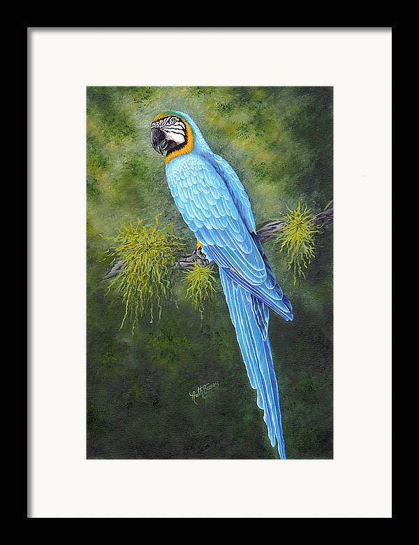 Bird Framed Print featuring the painting Buddy by Ruth Bares